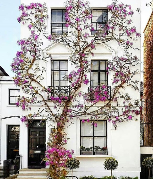 "I had to share this home with everyone that love things you dont see every day. This home puts life into perspective; in which when you surround yourself with great and positive things and people, great and positive things seem to grow or bloom around you. This  home is in the UK and they call it ""House of the climbing tree."" Its not only beautiful art, but its where only inspiration and nurturing thoughts dwell. No negative thoughts grow here!! #modern.architect #a_ontheroad #remaxgrandlll #remaxgrand #theblvddotinfo #inspirationisalwaysneeded #createpositiveenergy #receivebackpositiveenergy #justenjoylife #leaveeverythingelsetogod"