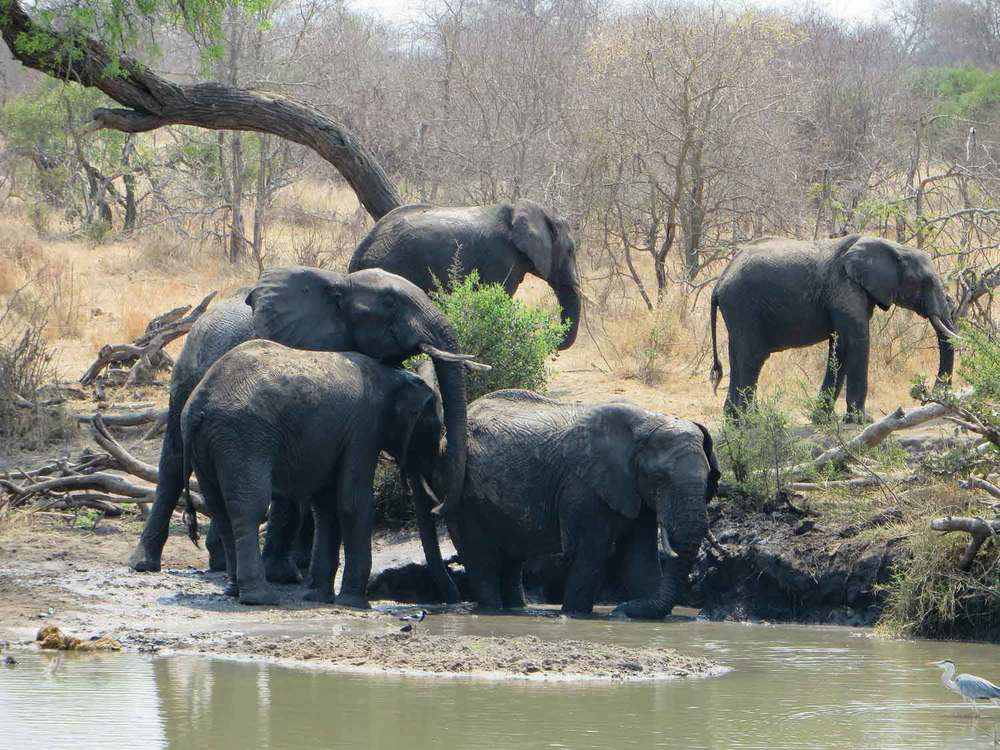 Kruger-National-Park-South-Africa