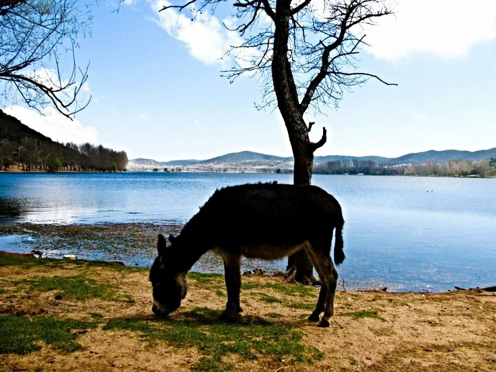 2011: A donkey meanders by a lake just outside of Ifrane, Morocco.
