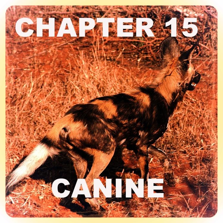 Chapter 15.jpg