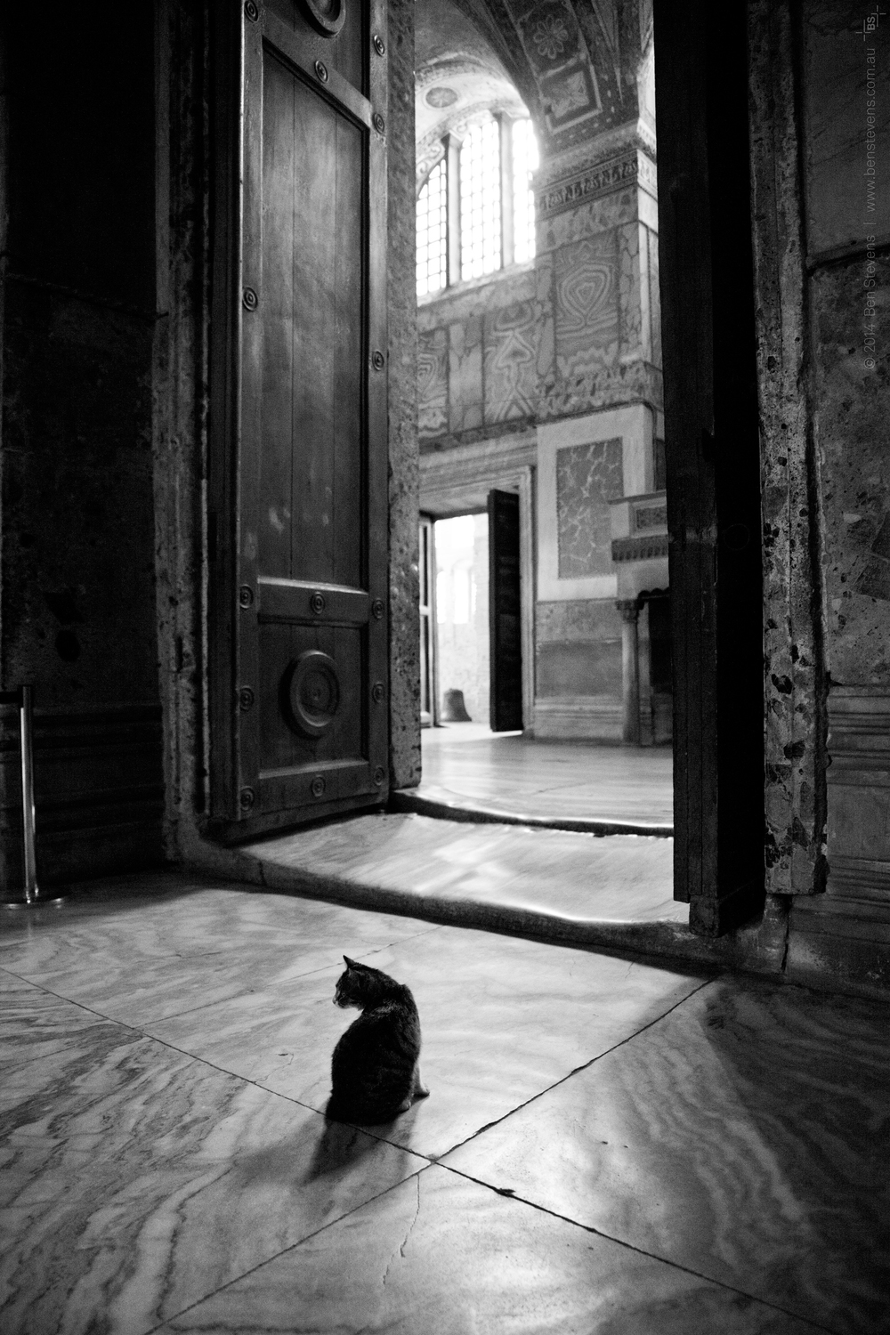 Habitat |Istanbul, Turkey March 2014 One of the many cats that survive inside the walls of Hagia Sofia, one of the world's oldest and most magnificent mosques. Purchase printshere