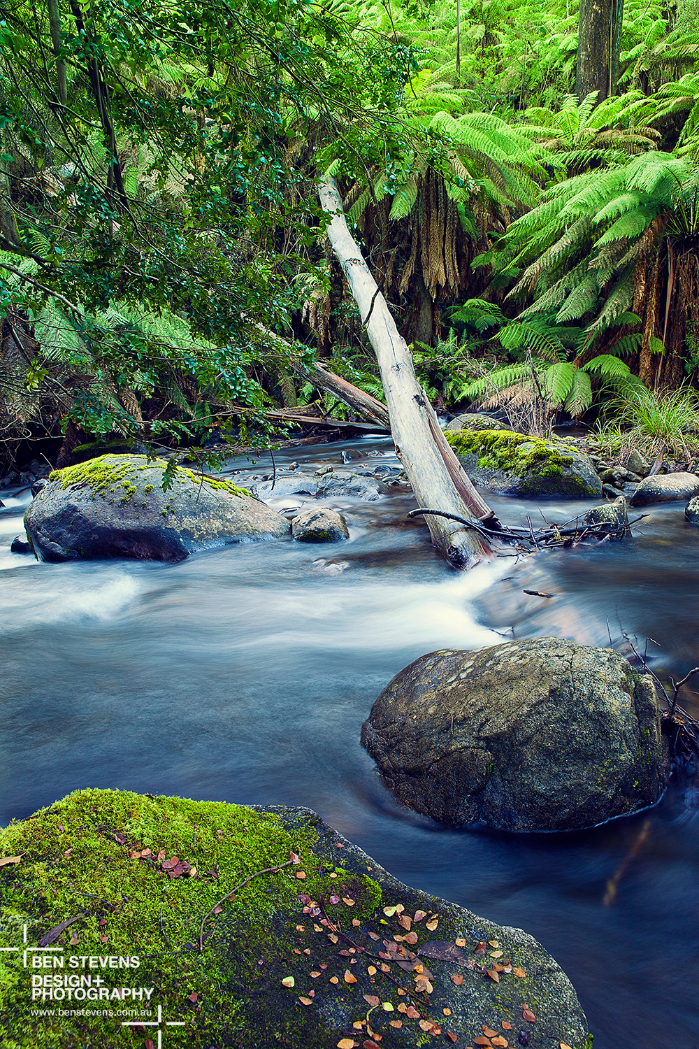 Rainforest Stream | Marysville, Australia June 2015 A quiet stream along Lady Talbot drive runs down to Marysville in Victoria's north east. This is a beautiful alpine part of Australia's south. Purchase printshere
