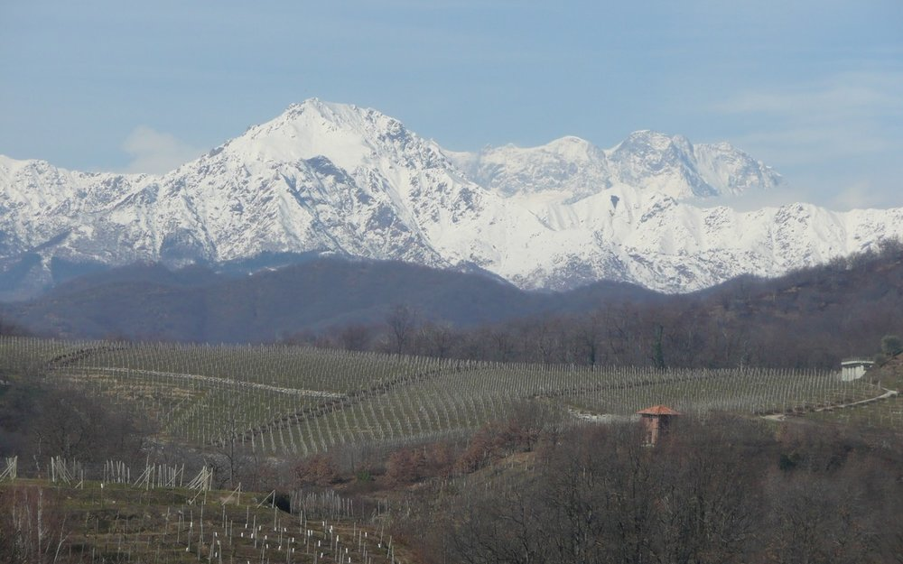 The vineyards of Gatinara sitting under the italian Alps