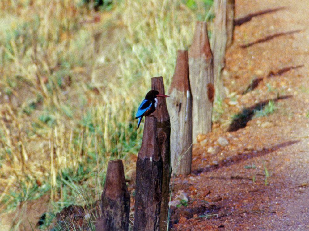 015 kingfisher.jpg