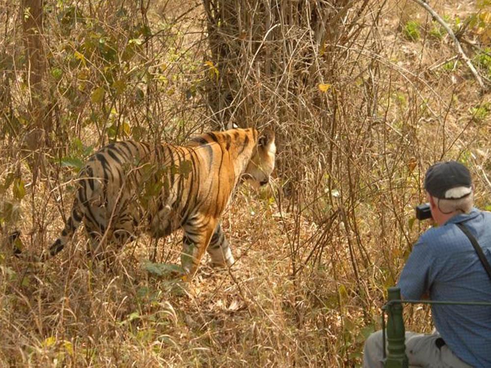 019 tiger and man.jpg