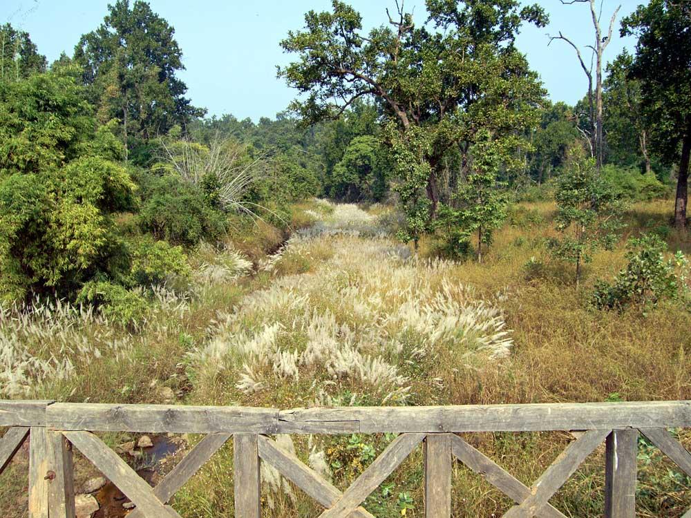 024 jungle bridge.jpg