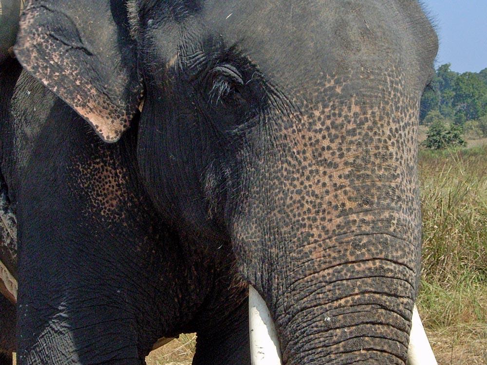 055 elephant.jpg