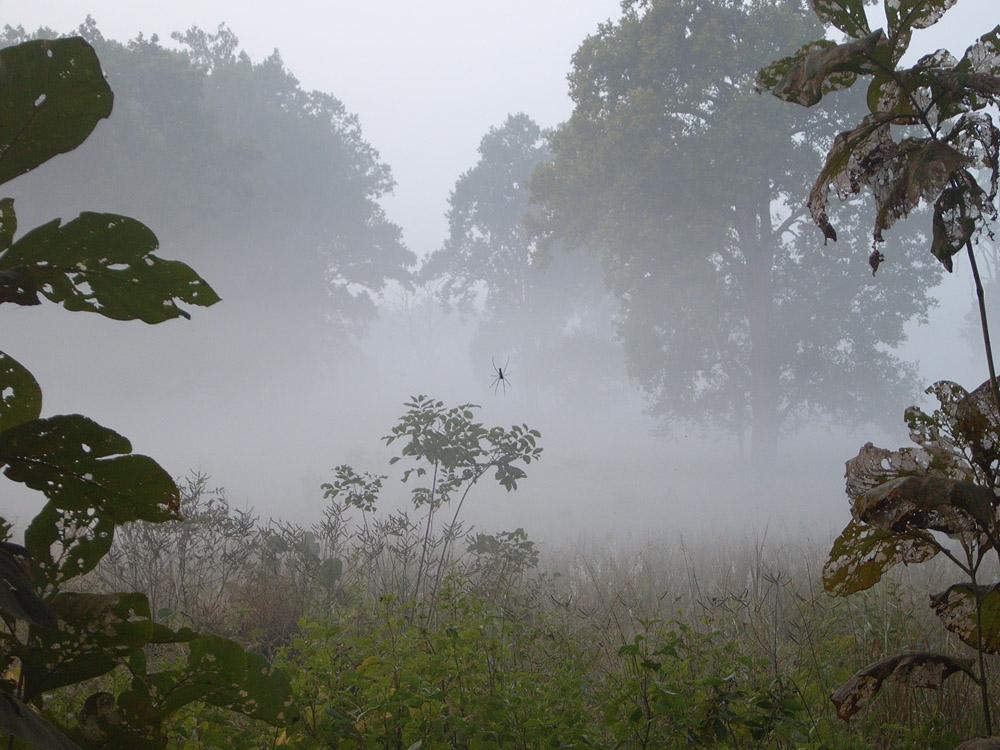 057 spider in fog.jpg