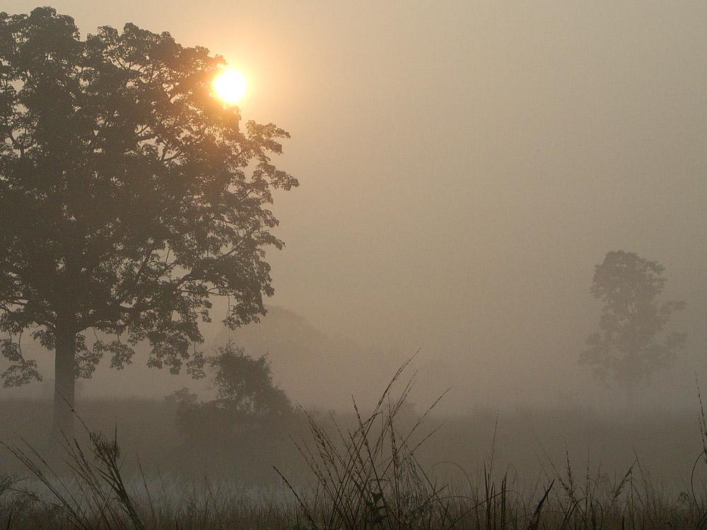 060 sunrise over forest fog.jpg