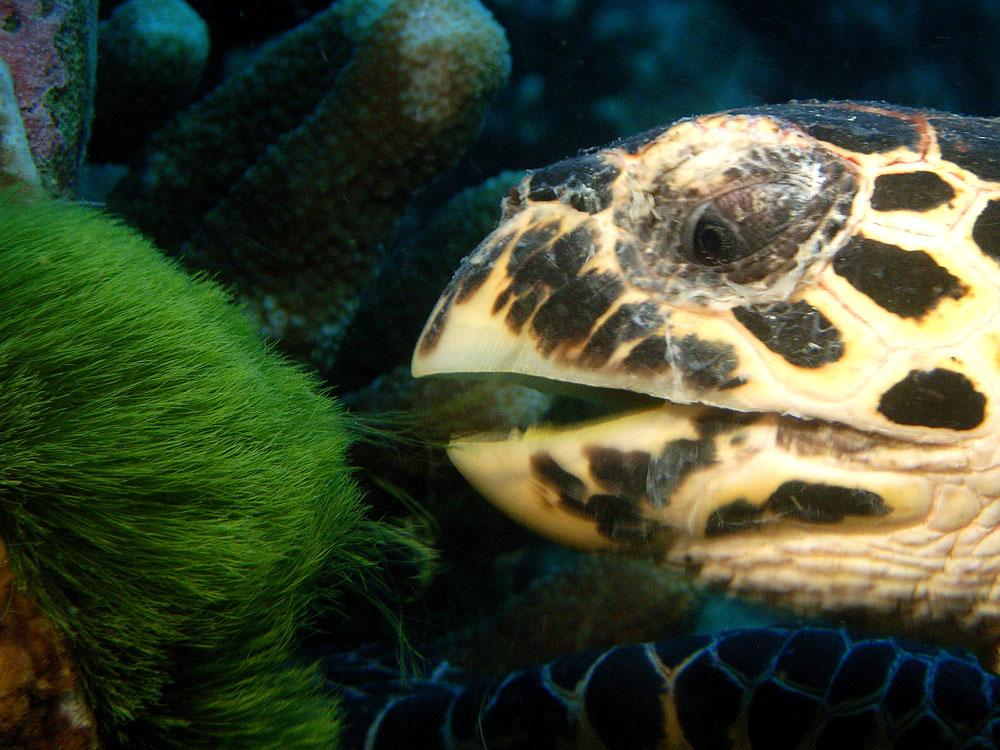 028 turtle - thailand.jpg