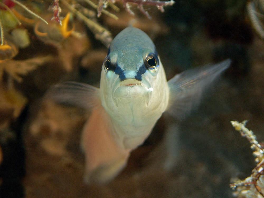 030 fish - raja ampat, indonesia.jpg