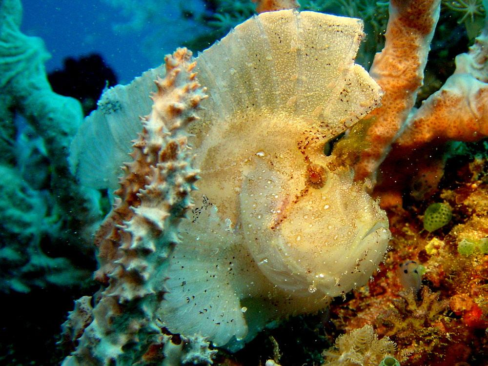 090 leaf fish - komodo, indonesia.jpg