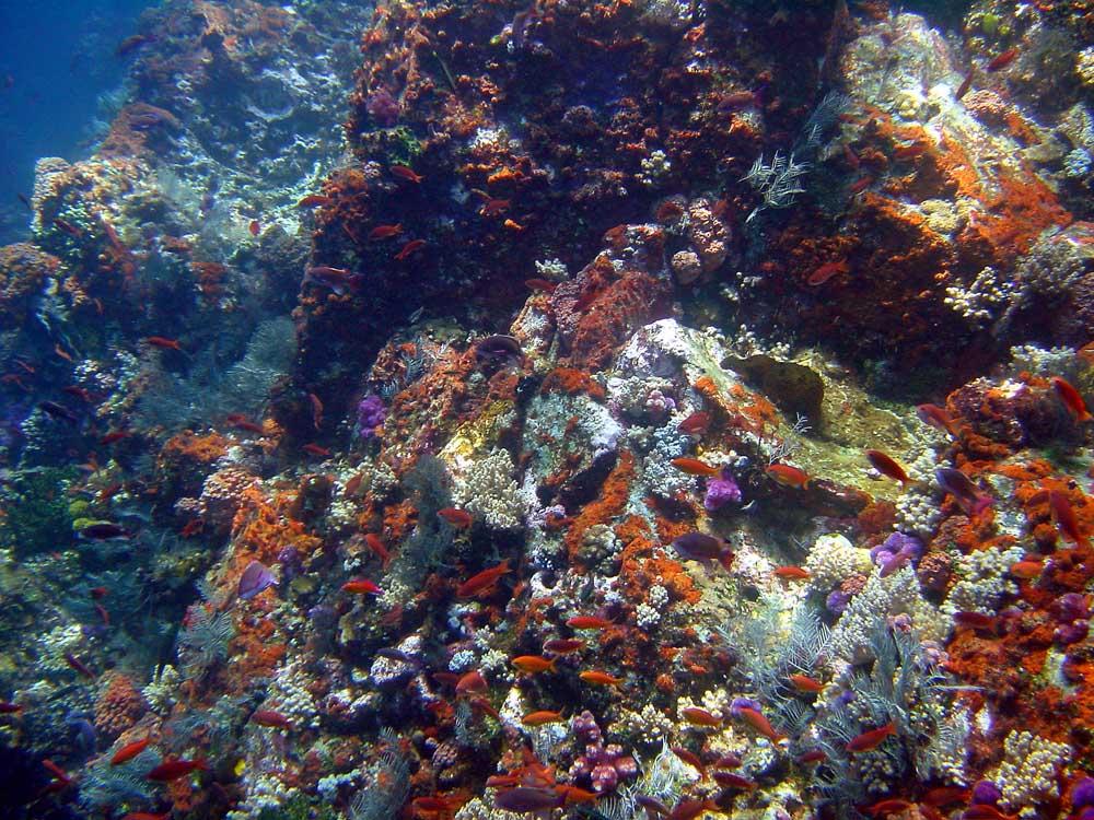 091 reef scene - komodo, indonesia.jpg