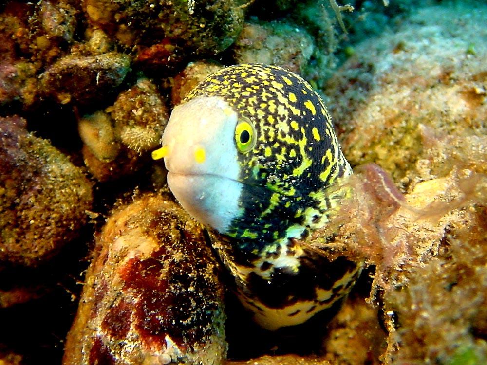 094 eel - flores, indonesia.jpg