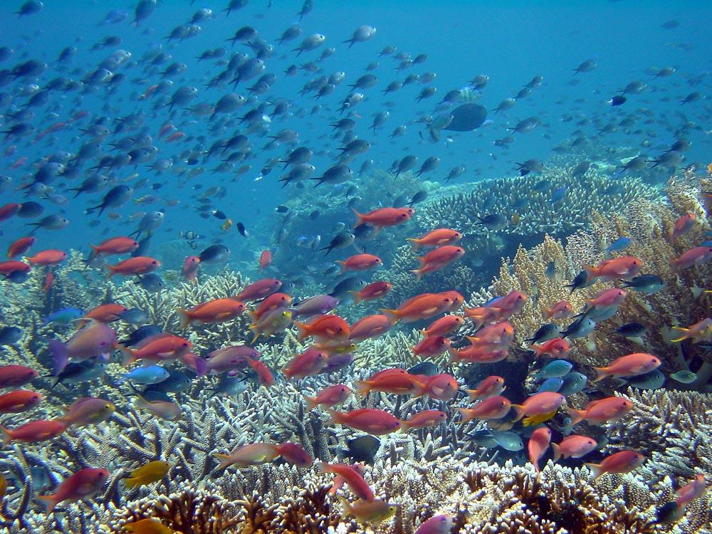 097 reef scene - komodo, indonesia.jpg