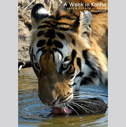 A Week in Kanha: Tigers & Others in India