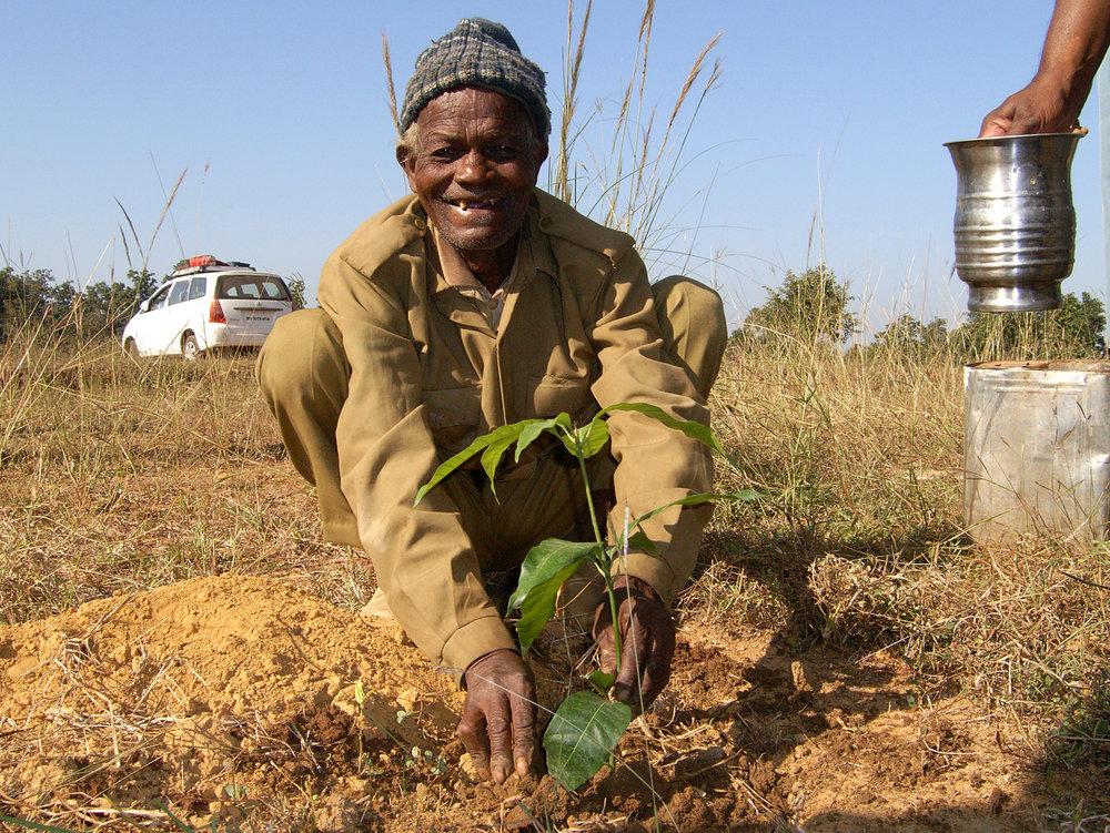 tree planting - munglu.jpg