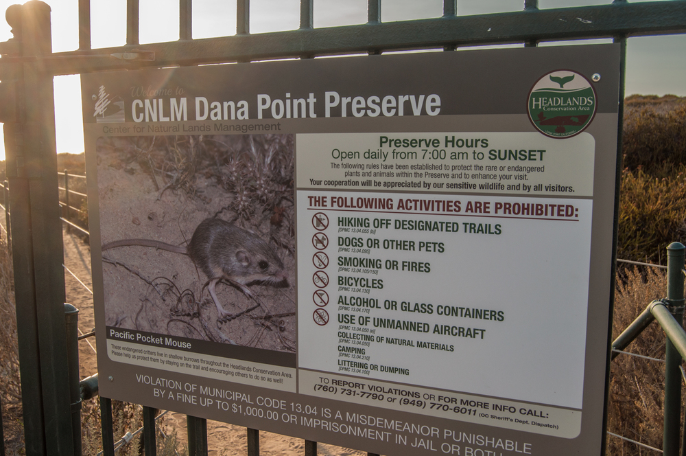This is truly one of those places where it is so important to follow every guideline. On the left, the savior of the Dana Point Headlands, the Pacific Pocket Mouse.