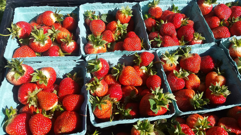 2016 Strawberries