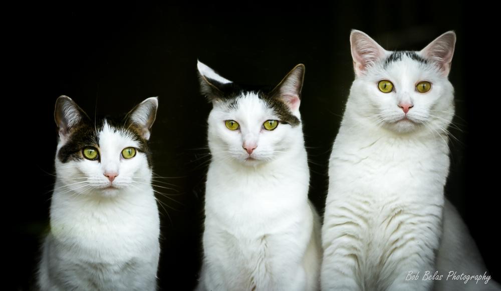 Lupe, Lola, and Juan.jpg