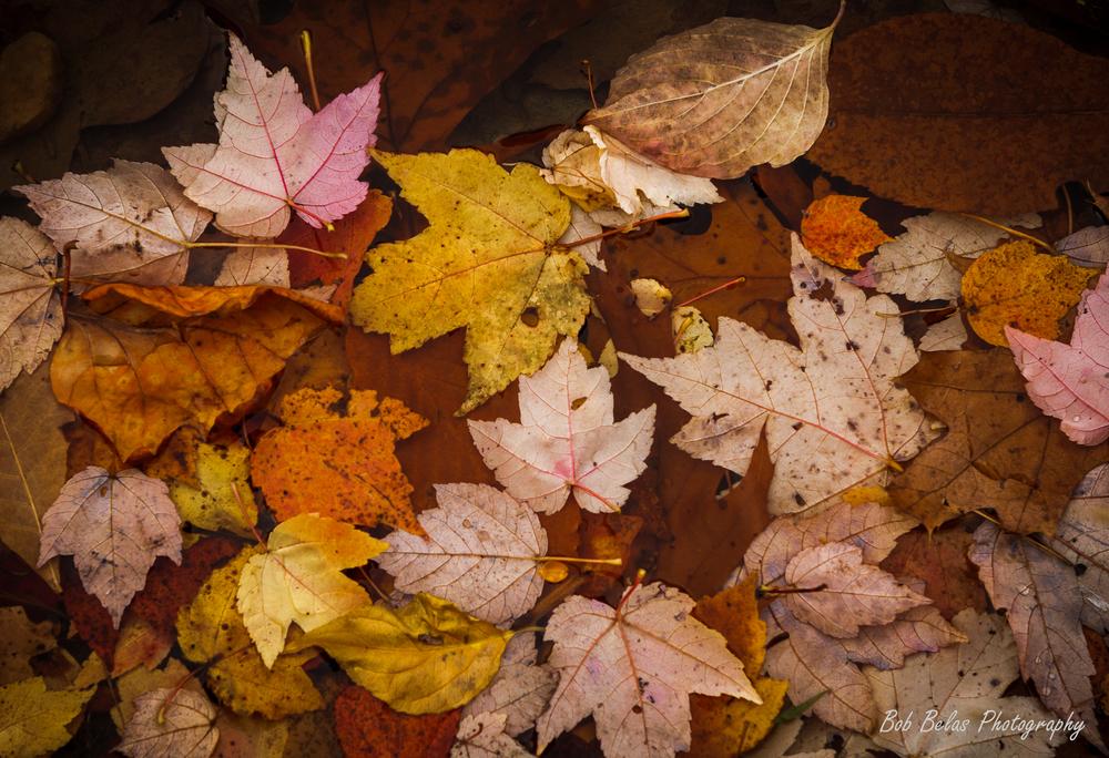 Autumn's fading glory