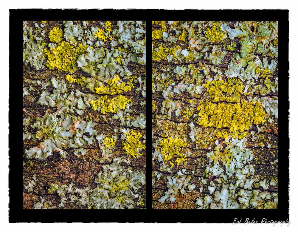 Lichen Diptych