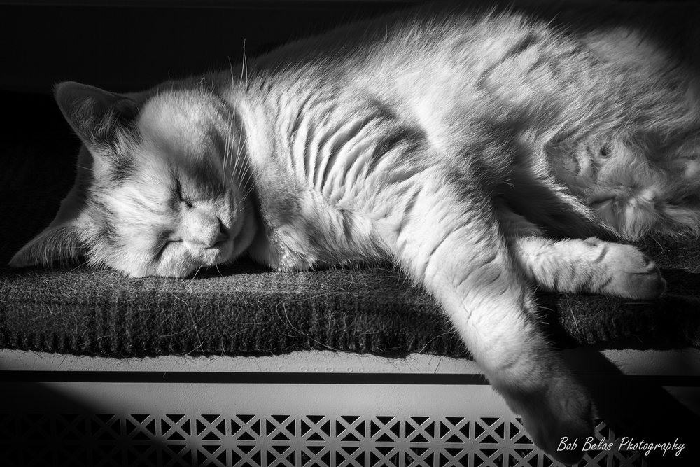 Juan At Rest, monochrome