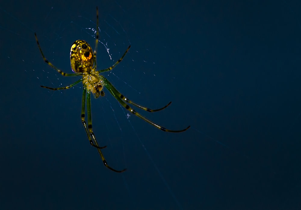 The Glowing Spider #3