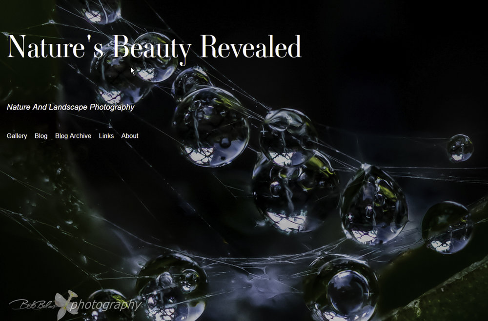 """Nature's Beauty Revealed"", the new website home page"