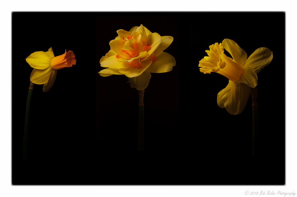 Spring's Warmth, composite, color