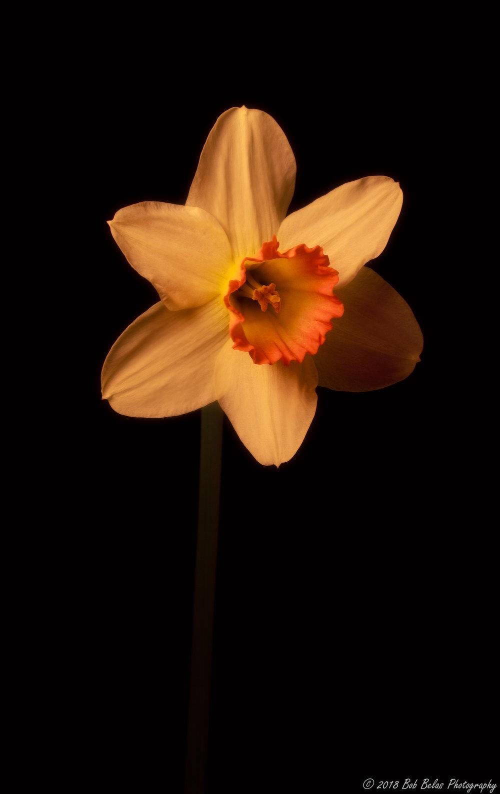 Spring's Warmth 4, color
