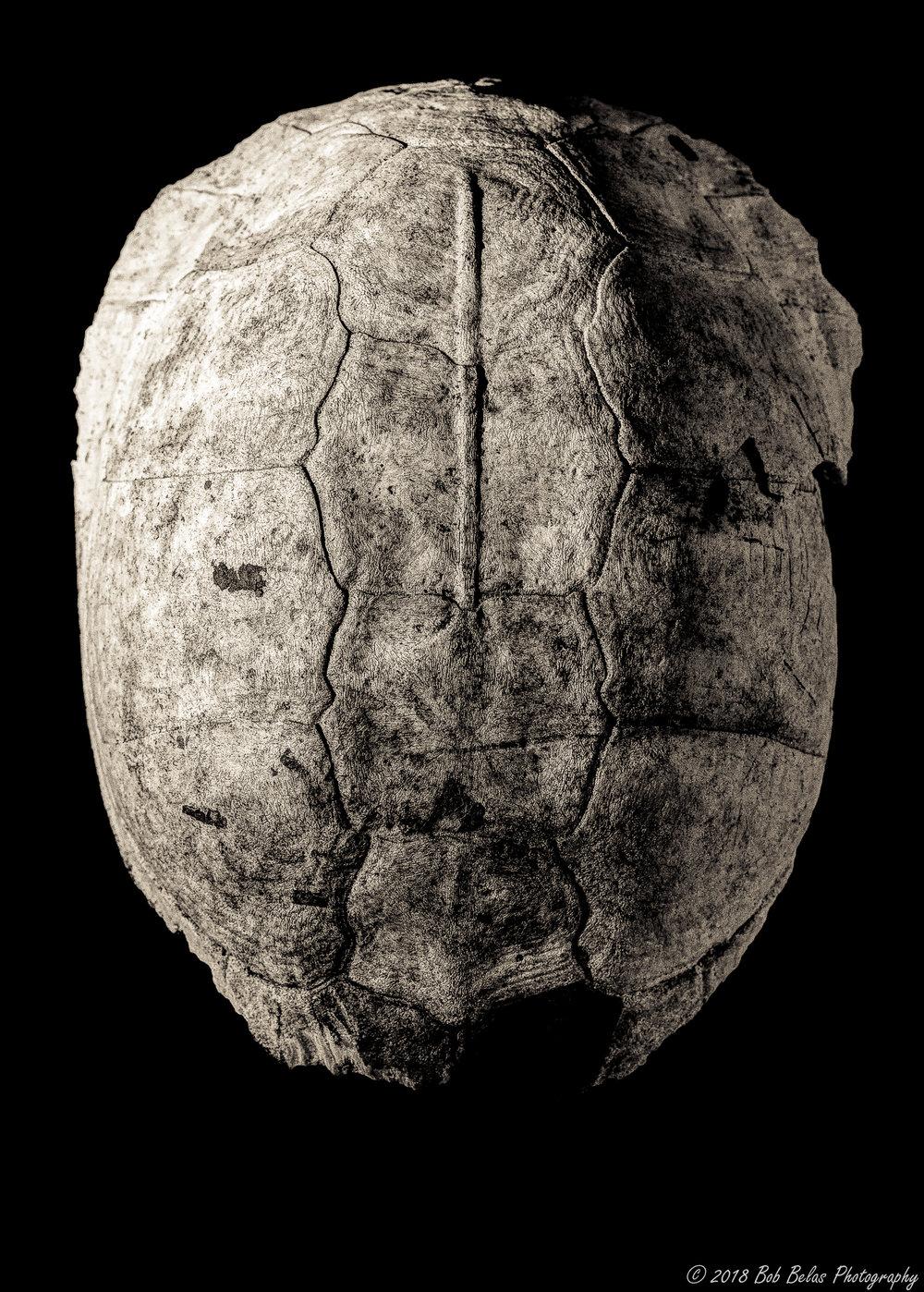Turtle Shell, monochrome
