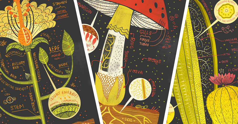 Art Pints: Plant Anatomy