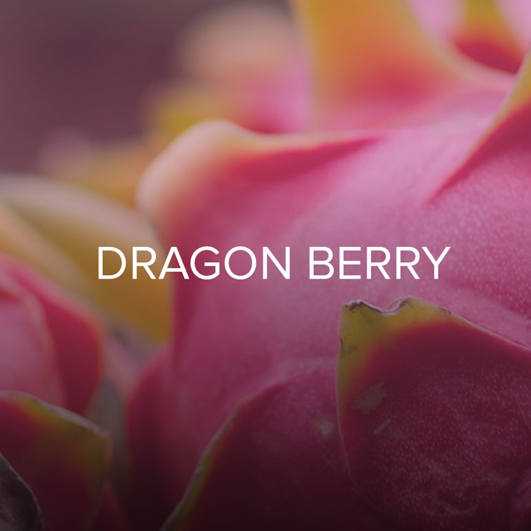 A lucky synergy of pink guava, tropical Dragon Fruit and divine tropical blossoms   Fruity Tropical; Coconut Floral, Dragon Fruit, Eucalyptus and Mint.