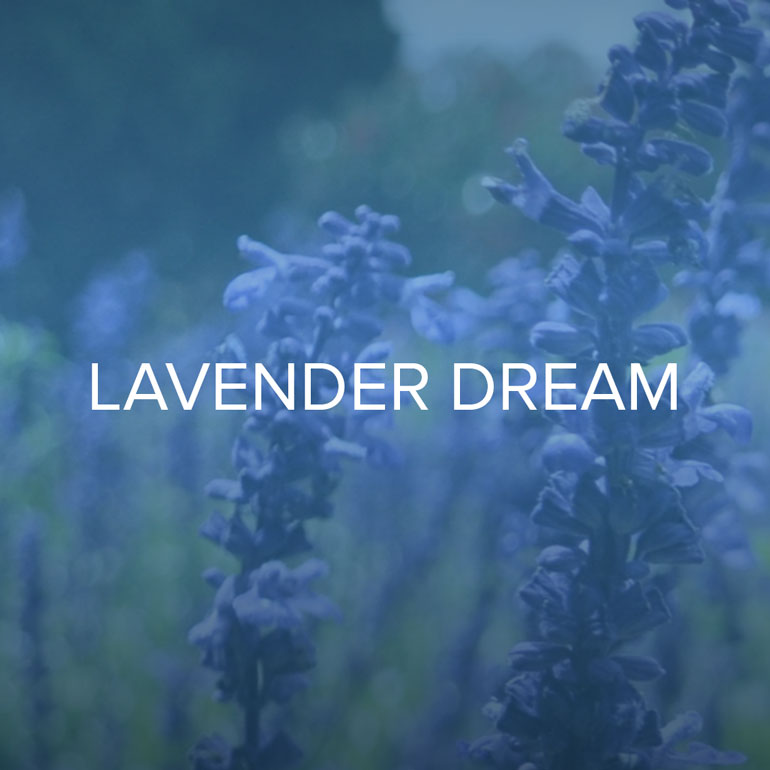 Soft lavender blossoms opening under a moon glow, their dazzling grace on the black velvet background of the night sky.   Lavender, Sugar, Vanilla and Amber.