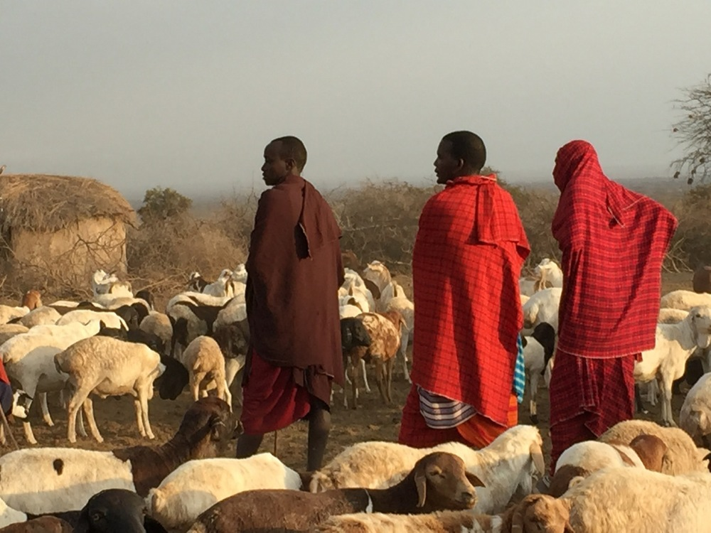 Masai men dressed in typical red robes and herding goats in the foothills of Kilimanjaro.