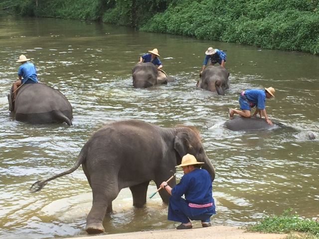 Elephants are bathed at the Thai Elephant Conservation Center, outside the city of Chang Mai in Thailand. Photo by Betsy Herbert, 2015