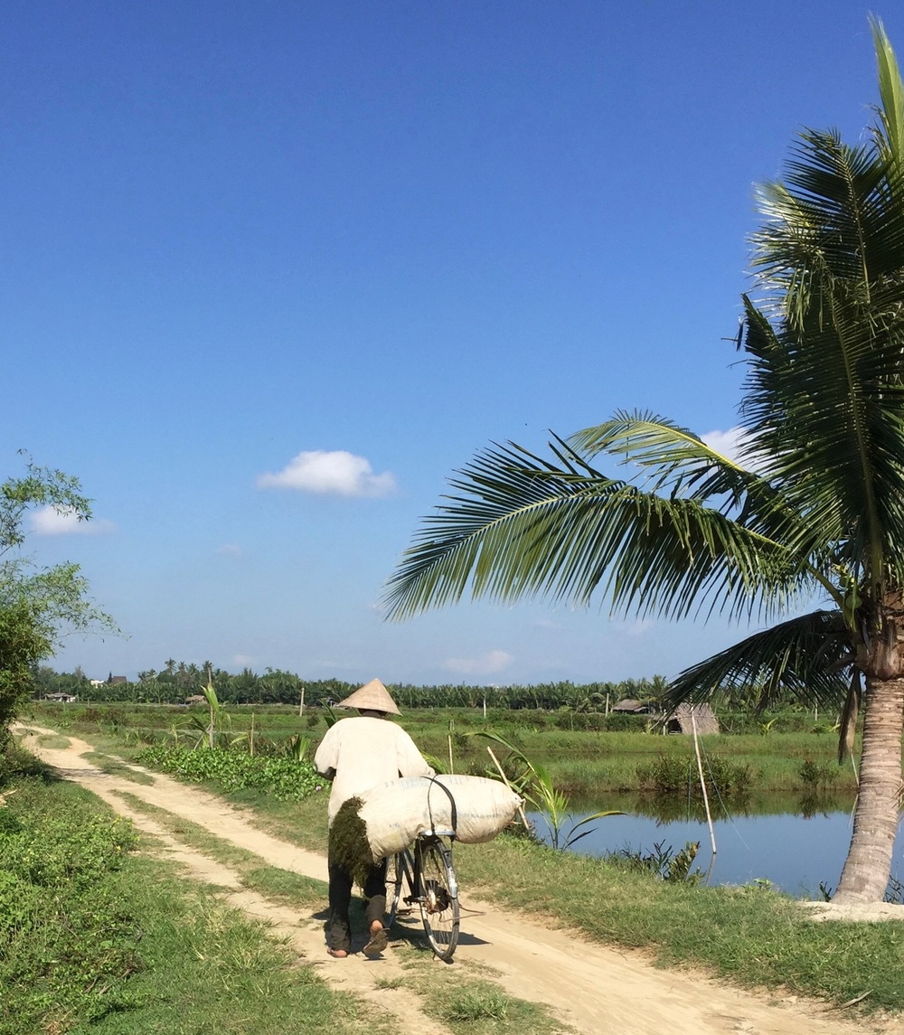 Farmer with bicycle outside the city of Hoi An. The area has beautiful residences with extensive vegetable gardens, as well as commercial farms.
