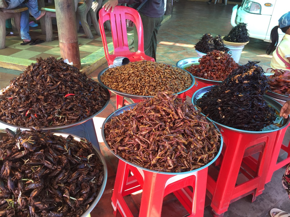 Some of the local snacks offered for sale on the road from Phnom Pehn. they include grasshoppers, crickets, spiders, and grubs.