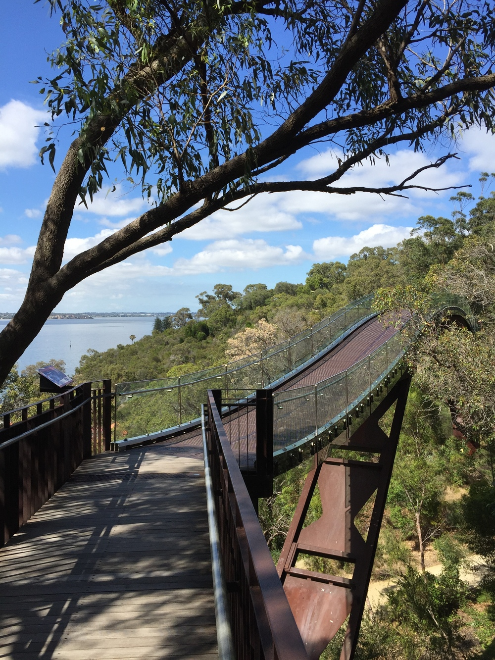 A canopy boardwalk structure in Kings Park gives you a birds eye view of some of Western Australia's 3,000 native flora growing here in the botanical gardens.