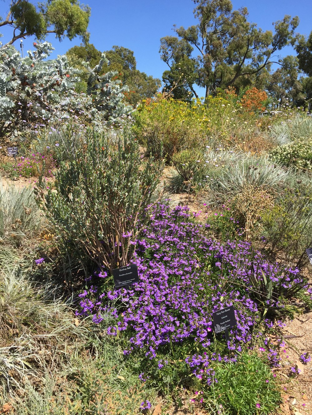 Some of the native plants in bloom in the Kings Park botanical garden in Perth, Western Australia.