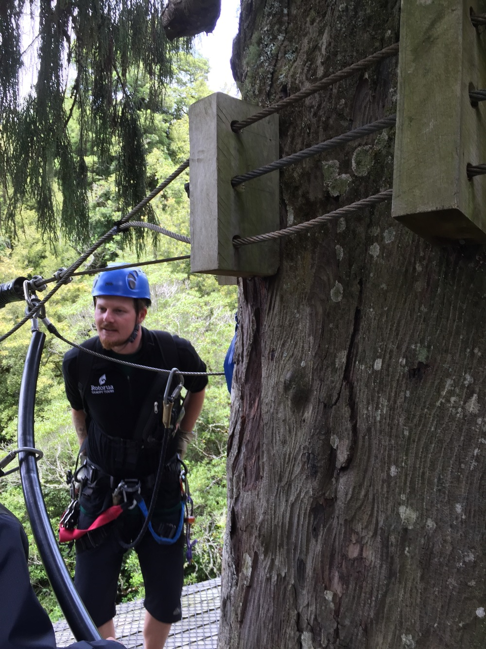 Scott, one of our zipline guides with Rotorua Canopy Tours, stands on a platform constructed 100 feet up around an old-growth kauri tree in Dansey Forest, near Rotorua.