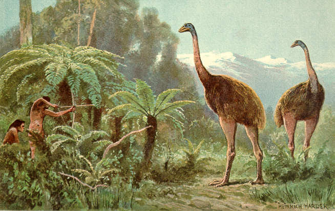 Drawing of the extinct moa by Heinrich Harder (1858-1935) - The Wonderful Paleo Art of Heinrich Harder, Public Domain, https://commons.wikimedia.org/w/index.php?curid=2417140. Note: the Maori did not use bows and arrows.