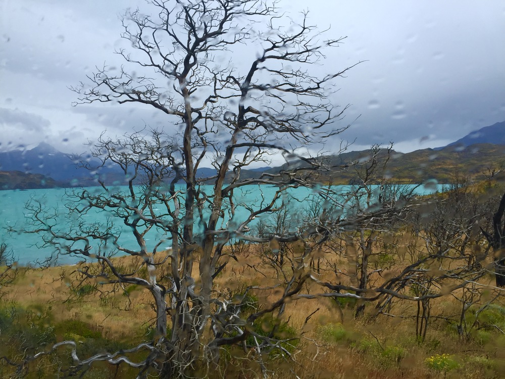 View from the van as we drive through Torres de Paine National Park on the way to the hotel.