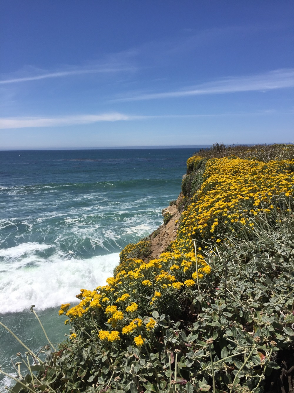 Once back in Santa Cruz, one of the first places I walked was along the coast at Wilder Ranch State Park.