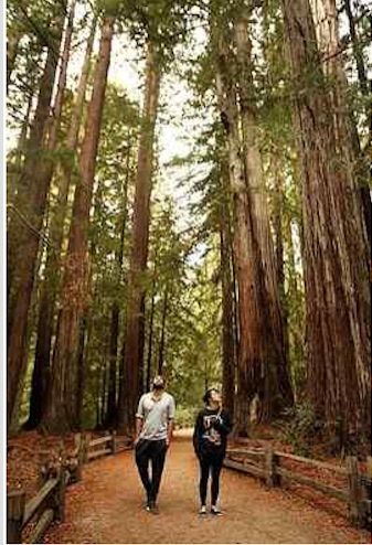 A walk through the redwoods at Big Basin Redwoods State Park can be a peaceful part of the day. (Dan Coyro -- Santa Cruz Sentinel)