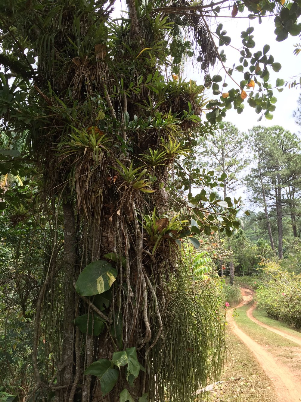 A tropical rainforest in the Escambrey Mountains (photo by Betsy Herbert 2017)