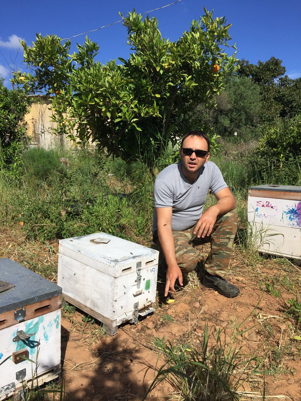 - Amateur beekeeper Dimitris Siozos in Crete with his bee colonies and orange tree in background. (Betsy Herbert -- Contributed)