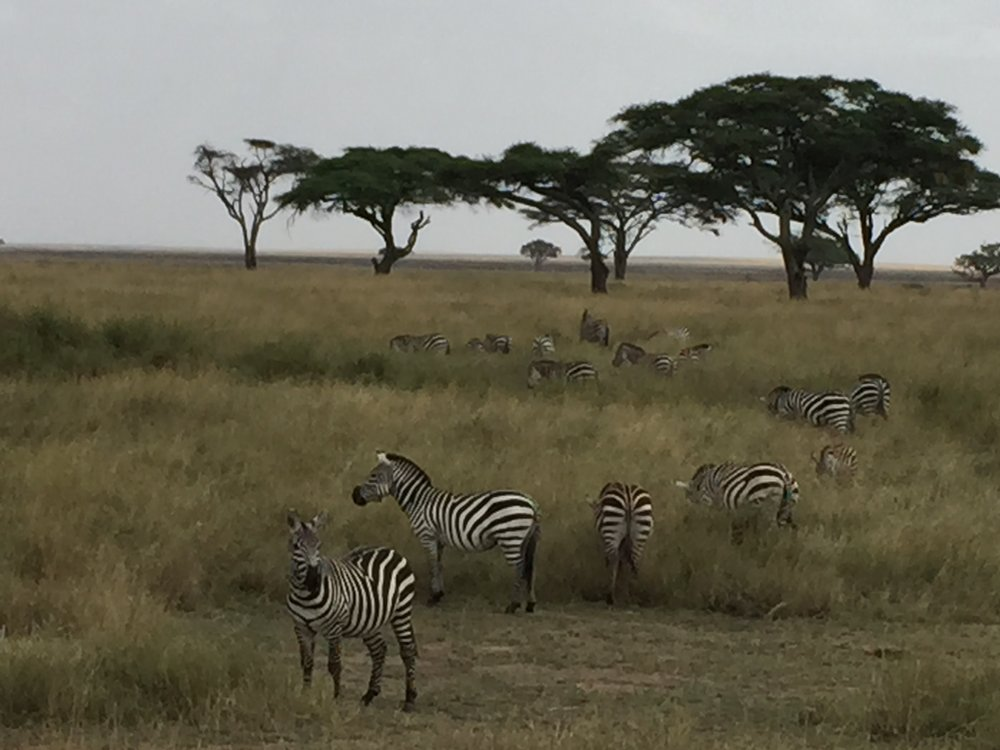 Serengeti National Park in Tanzania. Photo by Betsy Herbert 2015