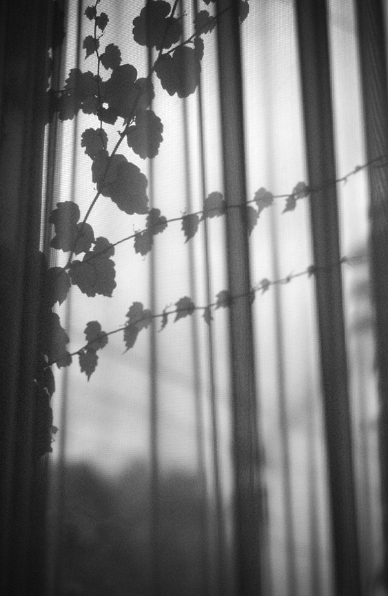 Curtain leaves.jpg